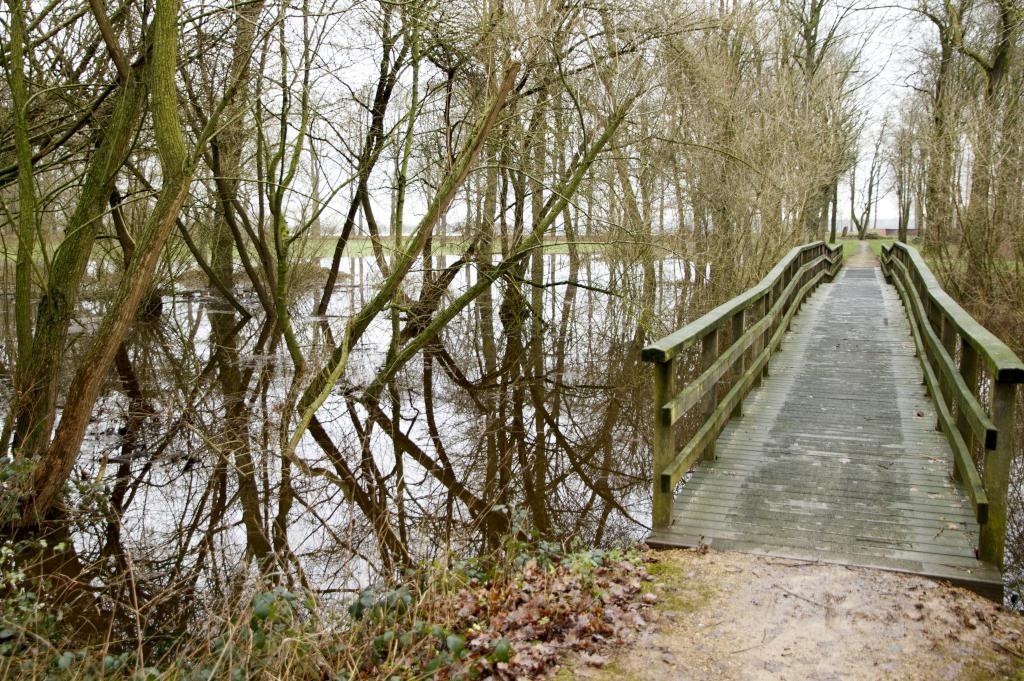 Ook in Geijsteren levert de hoge waterstand mooie plaatjes op.
