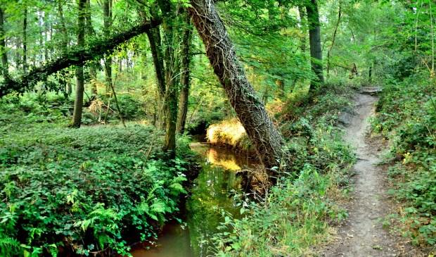 De zomer is nu overgegaan in de herfst, ook op Landgoed Geijsteren.