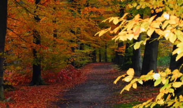 IVN Geysteren-Venray houdt een lezing over bossen en bomen van ijstijd tot nu.