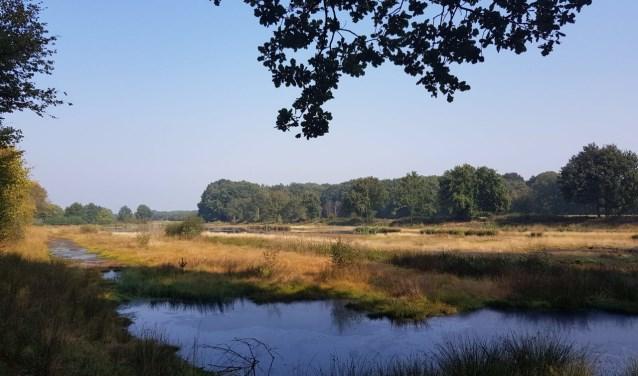 Natuurgebied op den Buus.