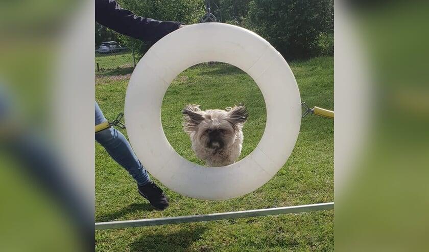 Zondag 26 mei Dag van de Hond, ook bij KC Venray.