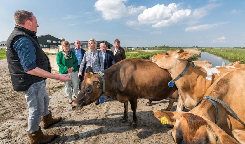 Piet Breen (bij zijn Jersey koeien) in gesprek met EU-parlementslid Annie Schreijer-Pierik en de gemeentelijke delegatie. Foto: Wim van Vossen