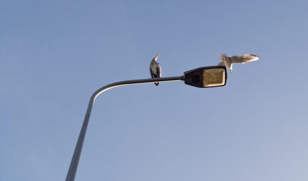 DeMooiUdenKrant - Uden vervangt oude verlichting door led-verlichting
