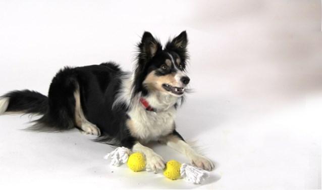 In het Agathepark gaat een heus hondenpretparcours plaatsvinden.