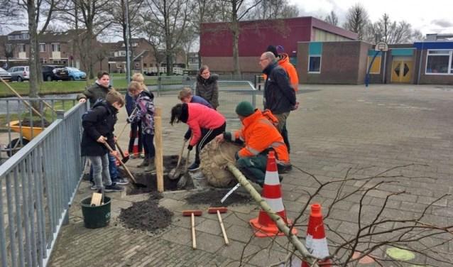 Basisschool De Dorpsakker in Assendelft kreeg een amberboom.