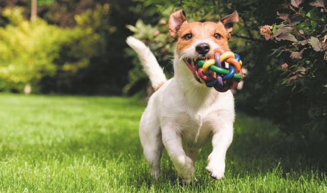 Honden mogen het hele jaar loslopen op De Weijver.