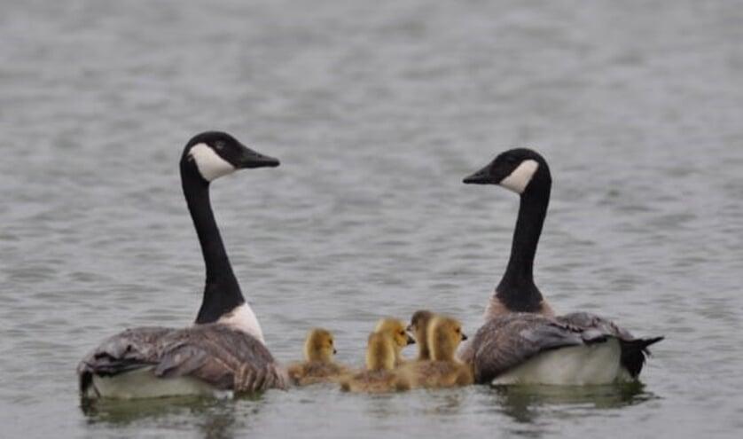 Vogels zorgen in deze periode voor nageslacht.