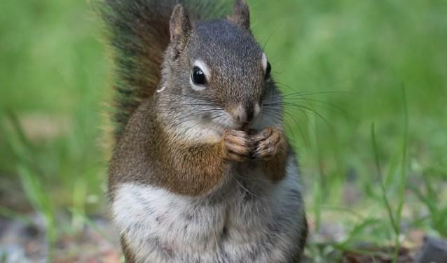 Tijdens de lezing maken bezoekers ook kennis met grond- en wangzakeekhoorns (de chipmunk).