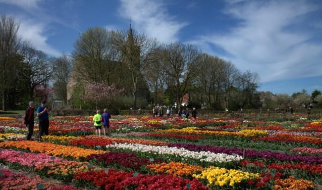4500 tulpensoorten in Hortus Bulborum