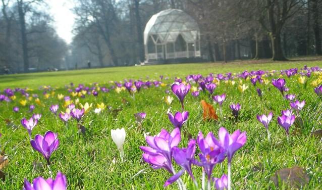 Zie en ruik het voorjaar. (Foto: Ad Timmers) © rodi