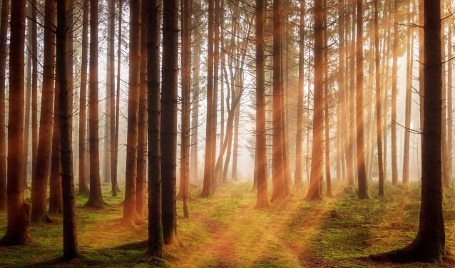 Forza wil dat op korte termijn heel veel bomen in Haarlemmermeer worden aangeplant.