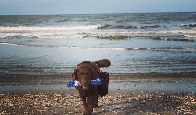 Joy is door zijn baas Alex getraind op het zoeken naar plastic.