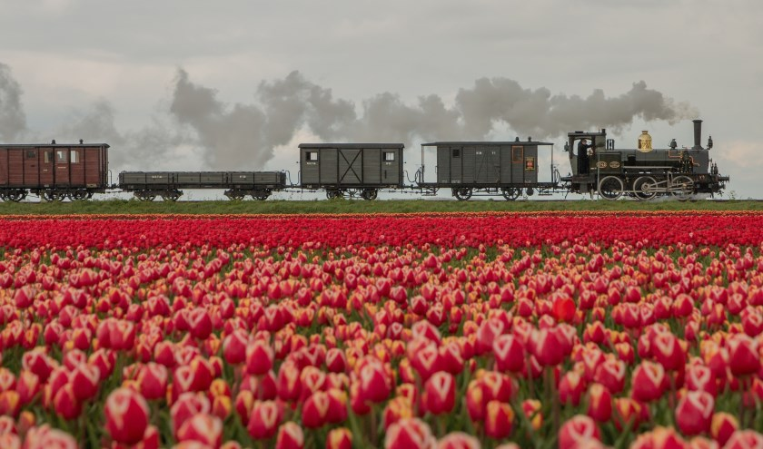 Bello door de tulpenvelden.
