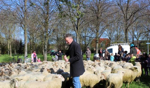 Wethouder Simon Broersma tussen de schapen op de Nachtegaal.