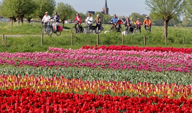 Deelnemers fietsen dwars door het West-Friese landschap.