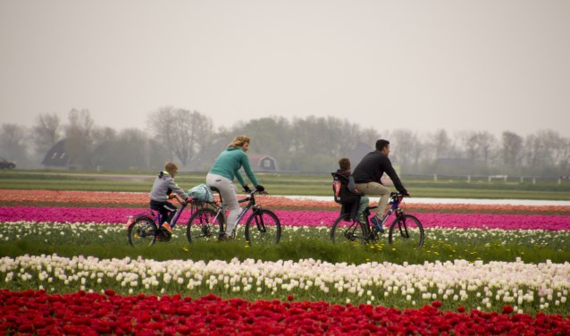 Deelnemers aan de Fietstocht van Bloeiend Zijpe fietsen langs de bloeiende bollenvelden in gemeente Schagen.