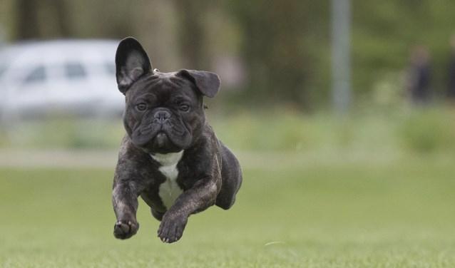 Leer meer over je hond tijdens de Dag van de Hond in Schagen.
