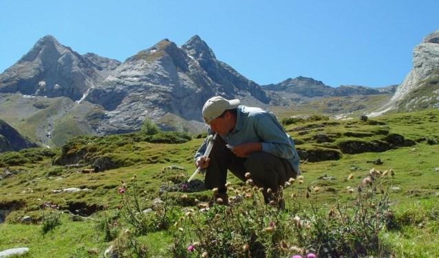 Pollinators research door Koos Biesmeijer.