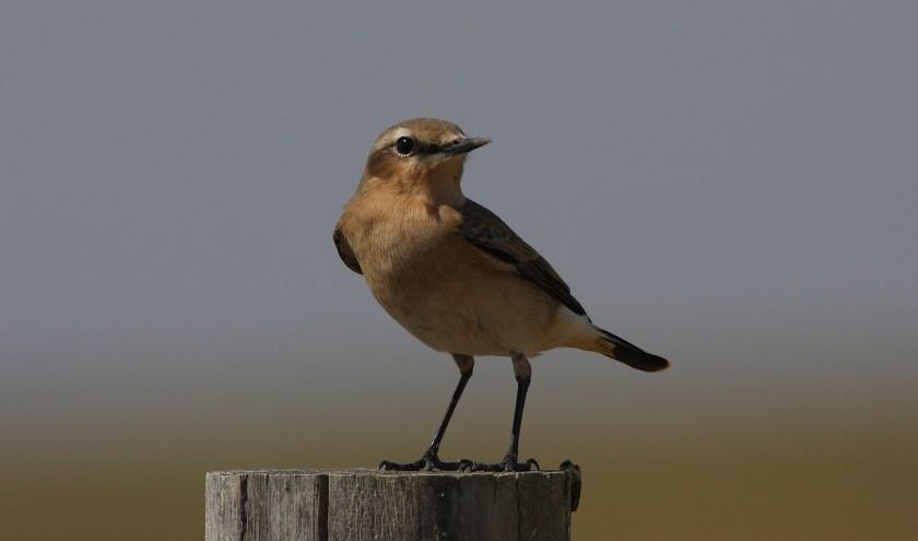 Veel te doen tijdens de Nationale Vogelweek in Castricum, Heemskerk en Beverwijk.