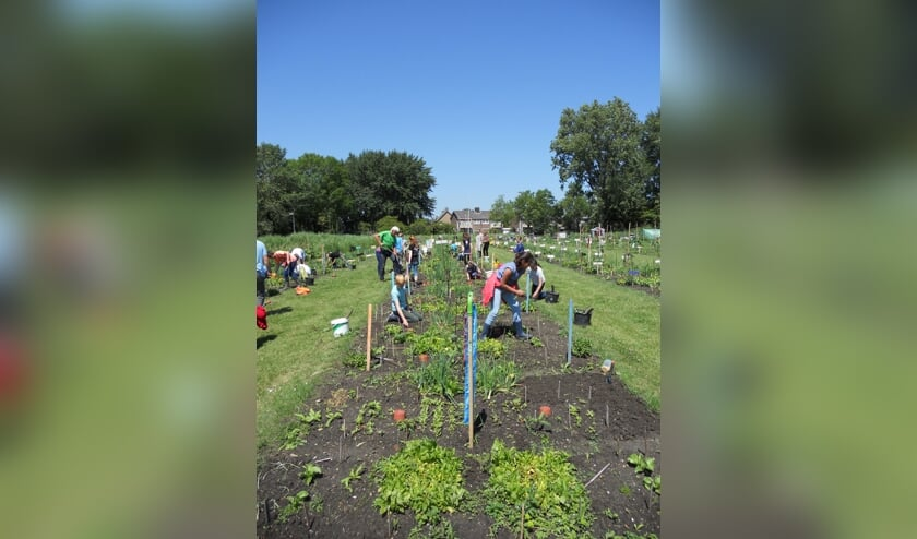 Leerlingen hard aan het werk in de schooltuinen.
