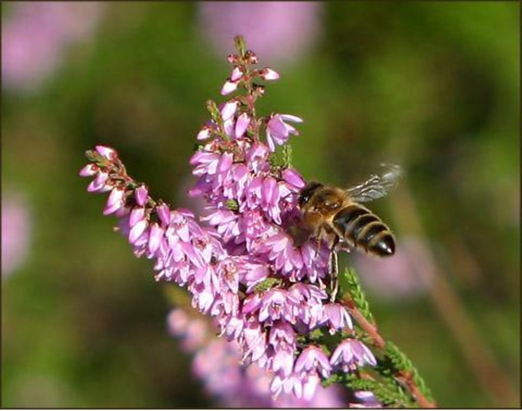 Beestjes  © rodi