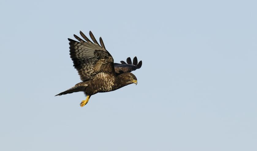 Vogels in de winter: leer ze (her)kennen.