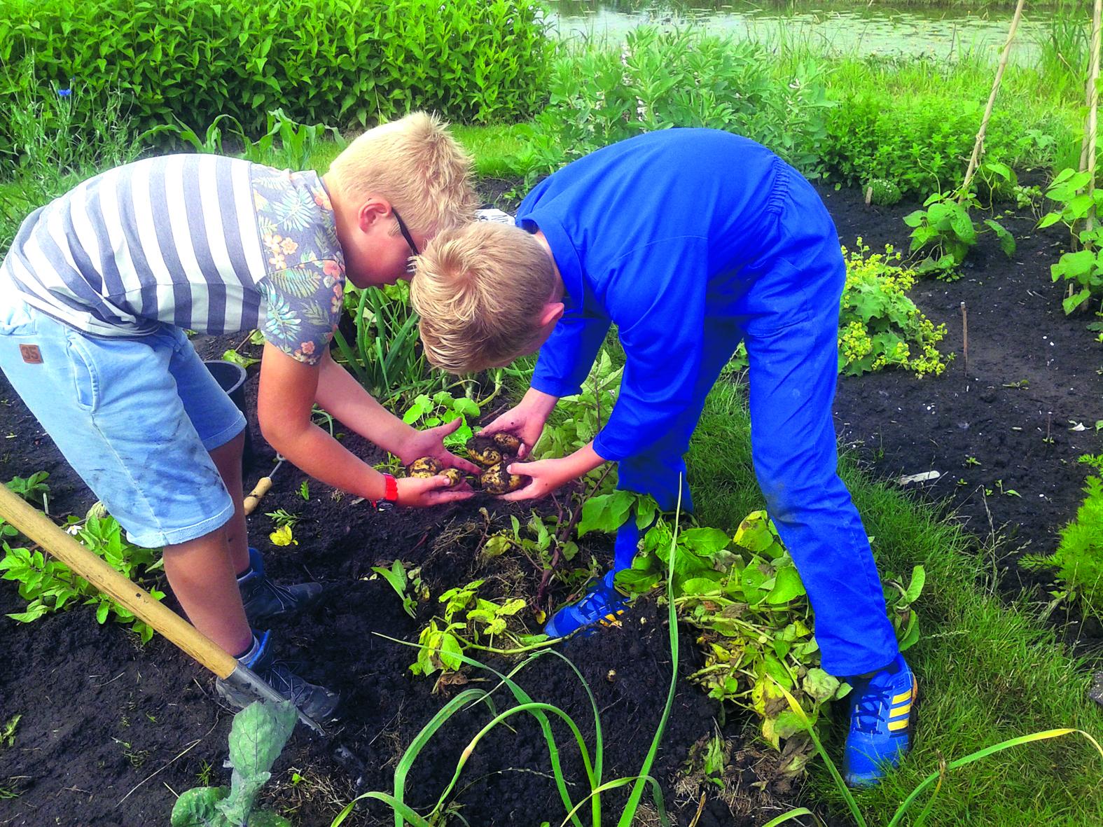 Kinderen vinden het leuk om in de grond te wroeten en te zien hoe een gewas groeit. (Foto: archief Rodi Media)