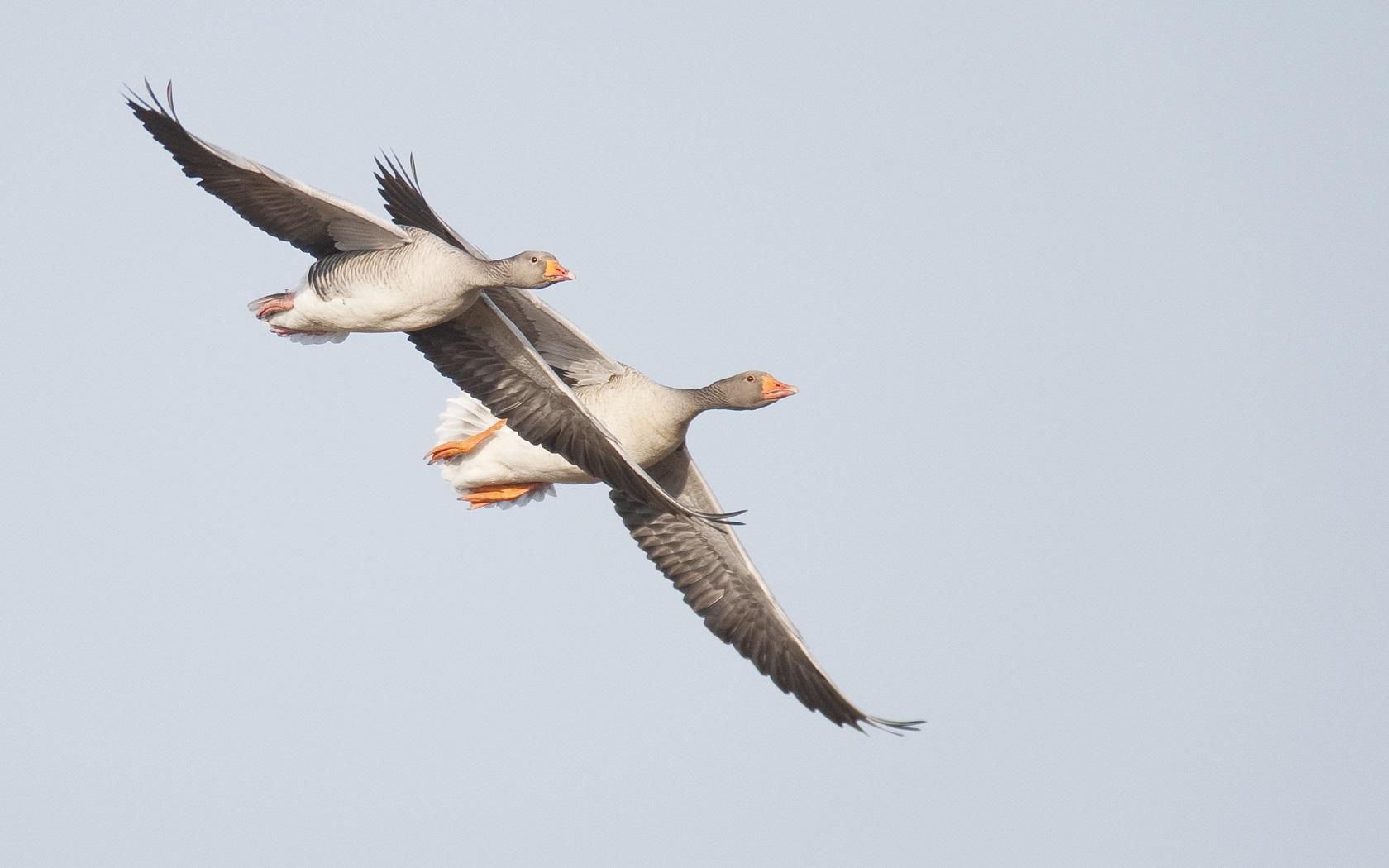 Kinderen kunnen van alles leren over de vogels tijdens de activiteit.  (Foto: aangeleverd)