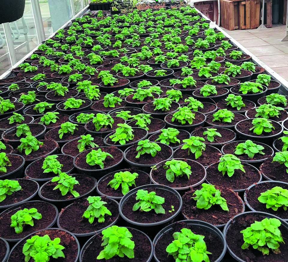 De plantenmarkt op het Clusius College is op 26 april. (foto aangeleverd)