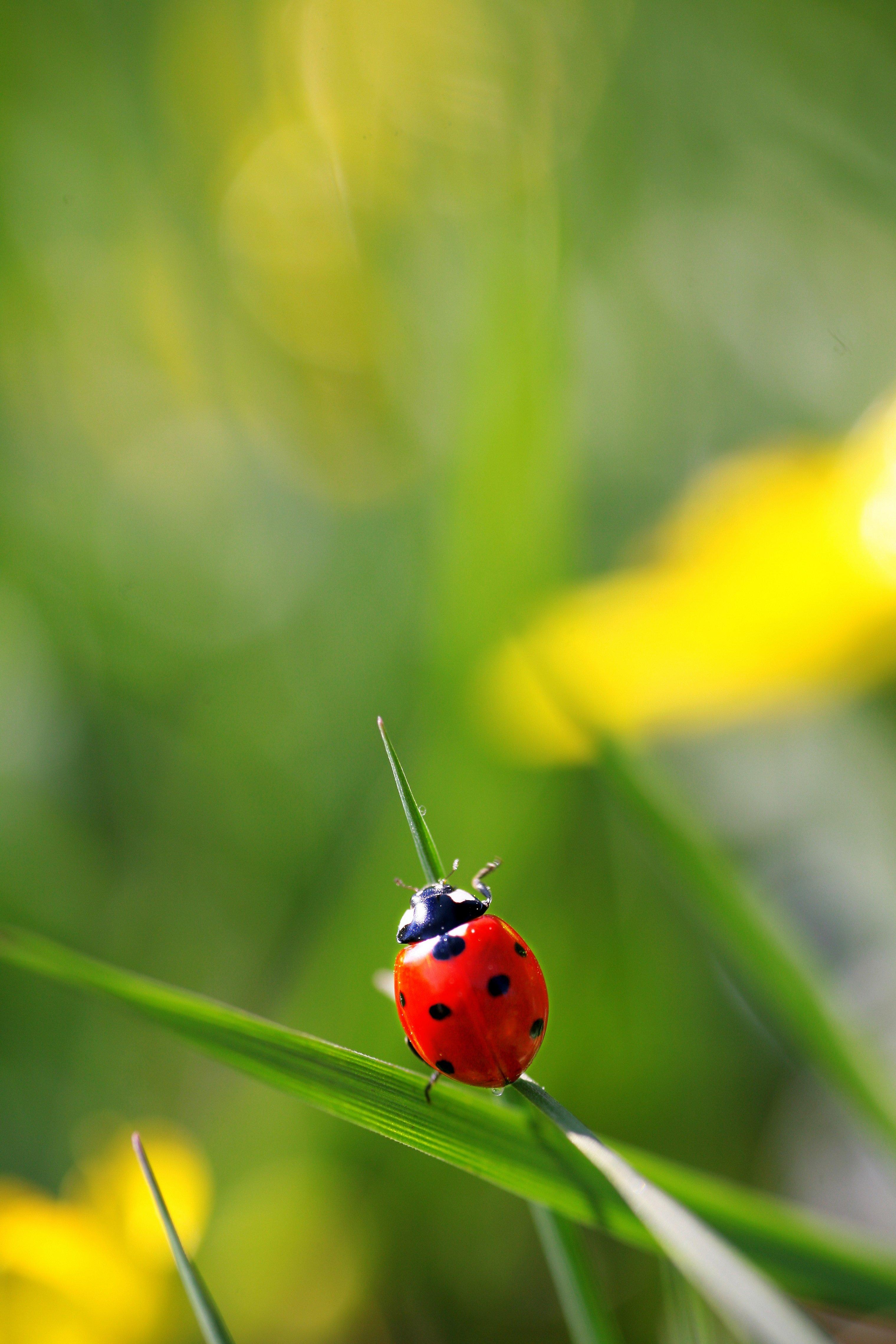 Een lieveheersbeestje. (Foto: Fotolia)
