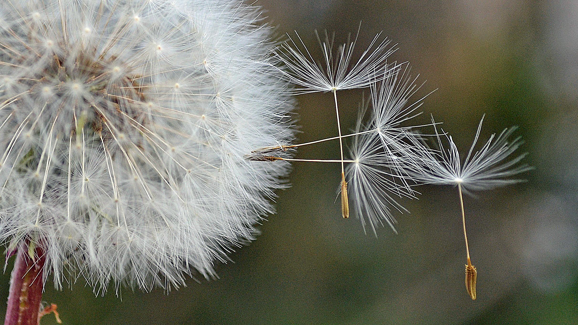 Zo mooi: gedragen door de wind…. (Foto: Sjef Kenniphaas).