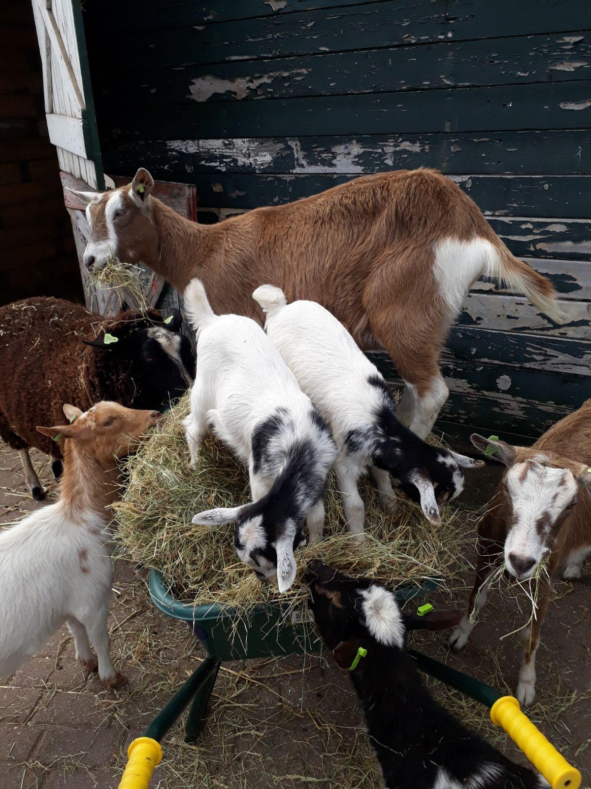 Beestachtig gezellig bij Kinderboederij De Veldmuis. (Foto: Kinderboerderij De Veldmuis)