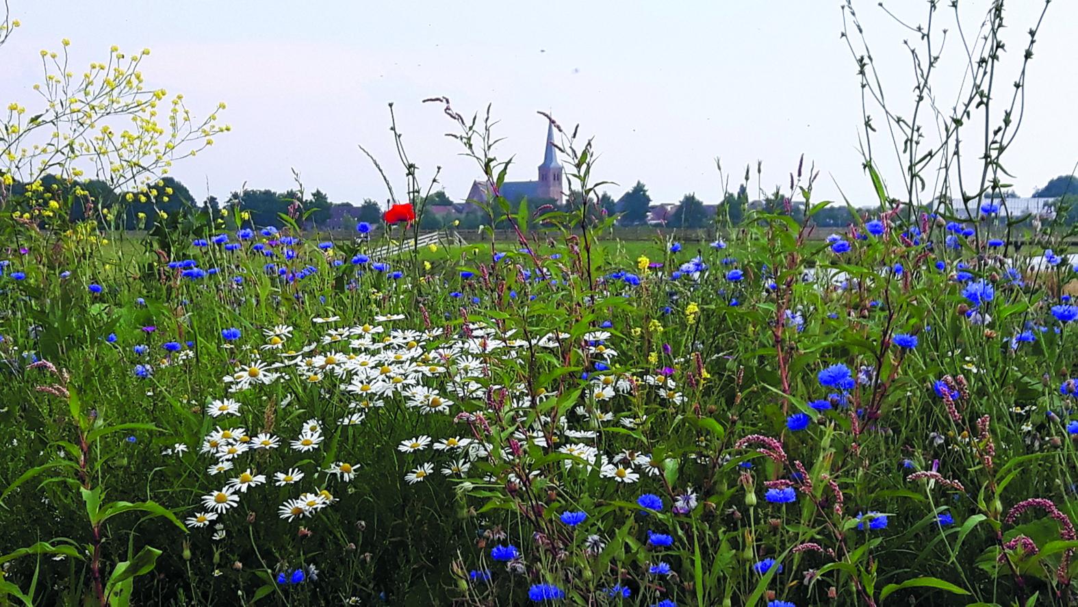 De gidsen vertellen over de historie en het beheer van dit gebied, de bloemen en planten en de vele (water)vogels. (Foto: Toos Brink)