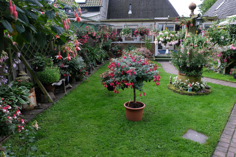 In de tuin van de familie Bijlsma in Hoogkarspel houdt Fuchsiavereniging Noord-Holland-Noord 14 en 15 juli haar fuchsiaweekend. (Foto: aangeleverd)