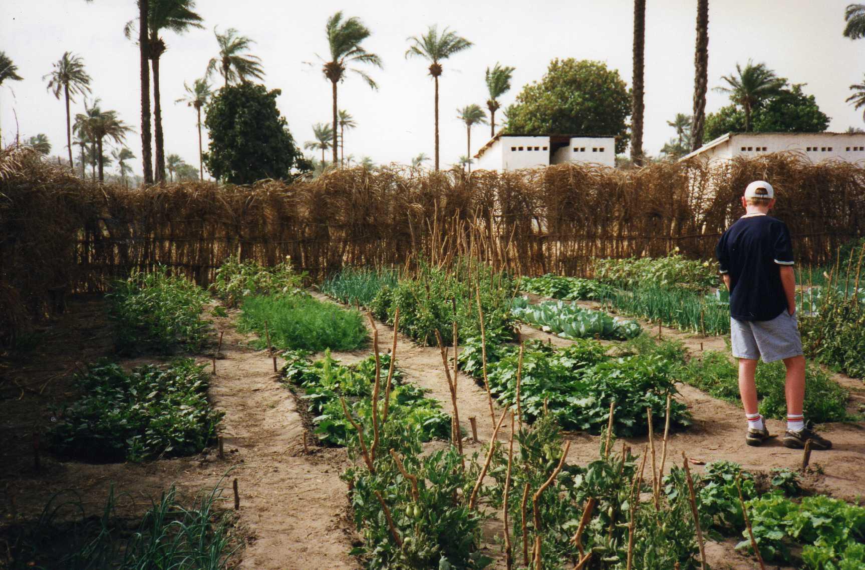 De Boca Loho Foundation zet zich in voor het tuinproject Brufut Garden in Gambia. (Foto: Boca Loho Foundation)
