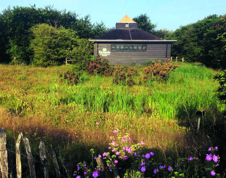 Momenteel staan er meer dan tweehonderd planten in de heemtuin. (Foto: aangeleverd)