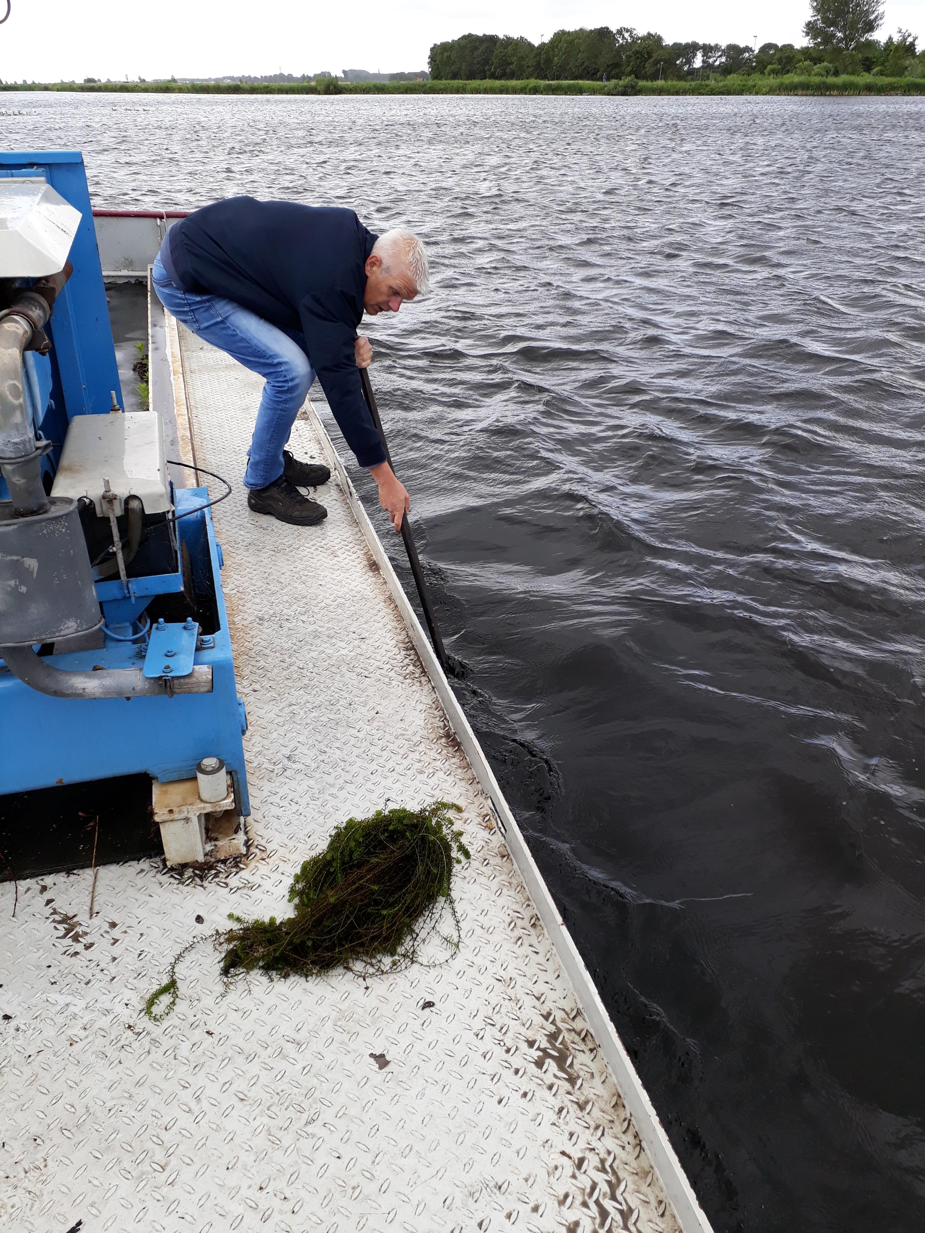 Indien er gemaaid wordt, worden de waterplanten op een duurzame manier verwerkt. (aangeleverde foto)