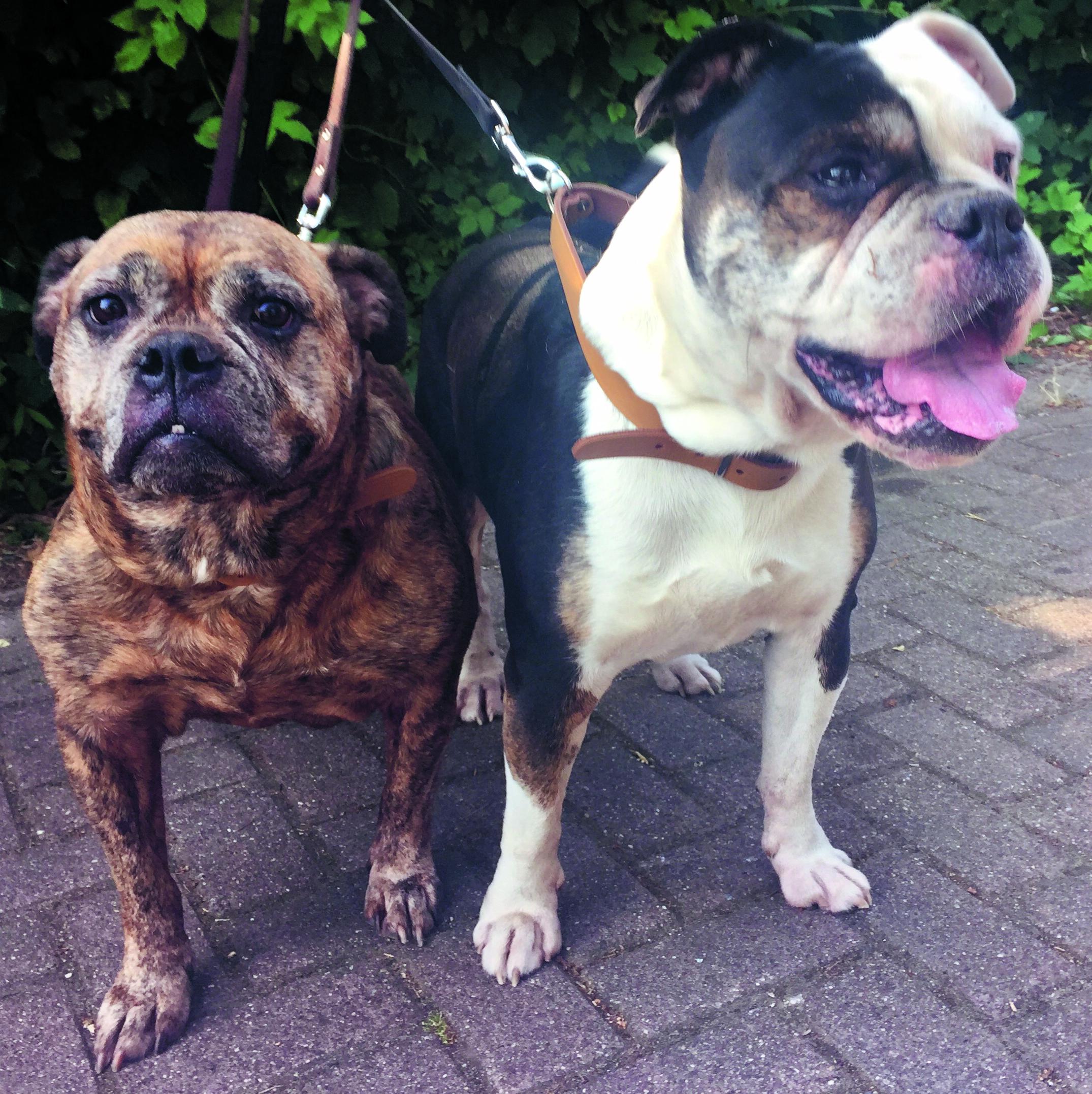 Jacky en Joy zoeken samen een nieuw huisje. (Foto: Rodi Media)