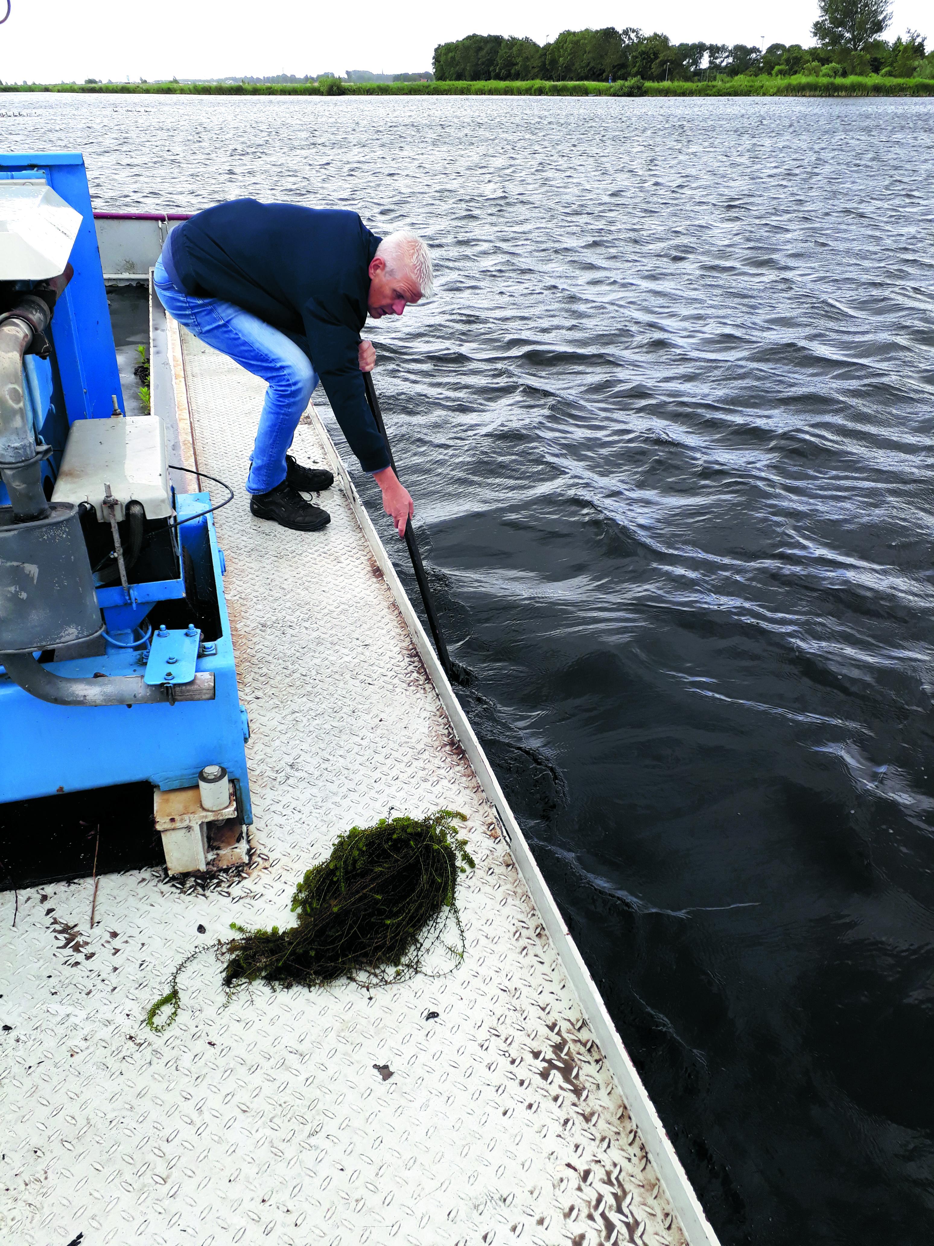 Op vele plekken in Nederland hebben waterrijke gebieden zoals het Alkmaarder- en Uitgeestermeer last van explosief groeiende waterplanten. (foto aangeleverd)