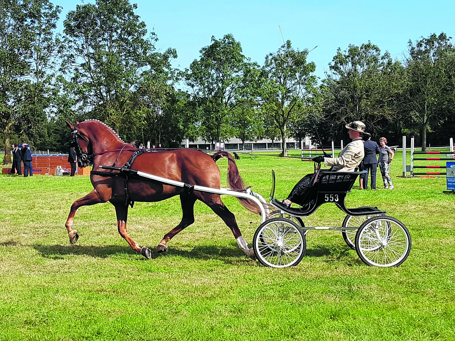 """<p>'Je paard moet voor je willen werken, anders ben je nergens'<span class=""""chapeau""""><br />Dressuur, springen &amp; Schoonste Geheel bij Ri"""