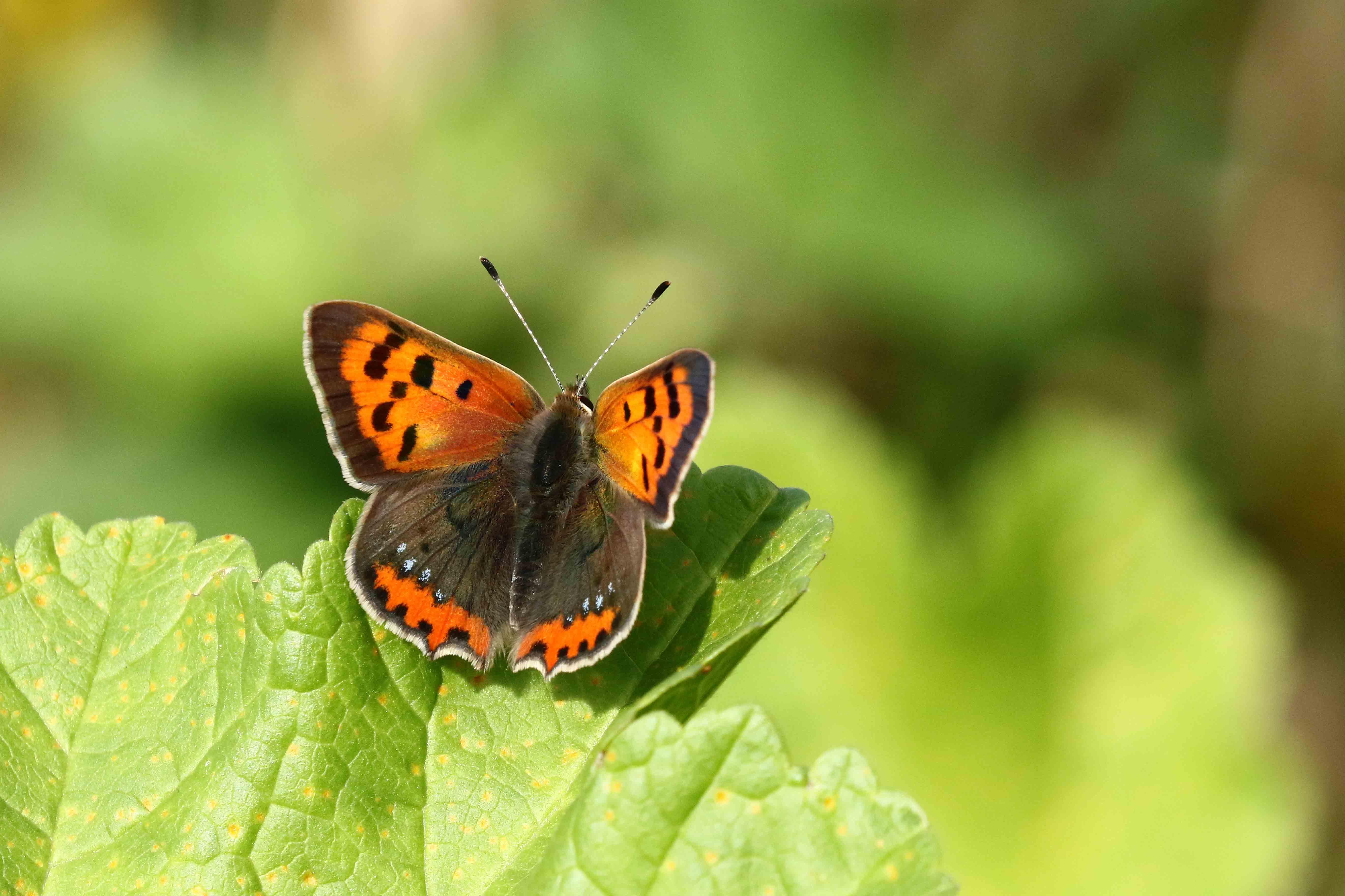 Meer weten over insecten? Kom aanstaand weekend naar het Rundveemuseum in Aartswoud. (Foto: Hanneke de Boer)