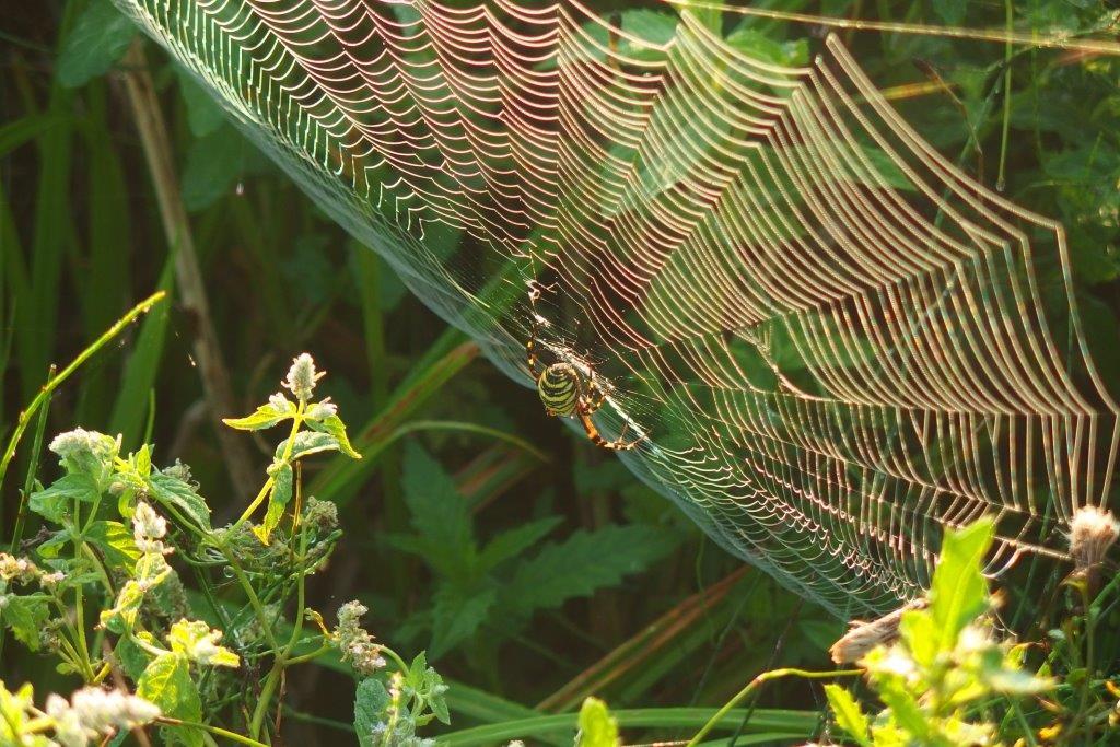 Spinnenpoten. (Foto: Pixibay).