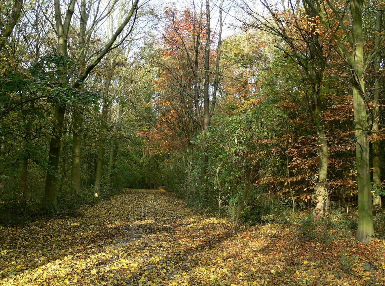 De bodem van het Streekbos wordt zondag 21 oktober tijdens een doe-activiteit onder de loep genomen. (Foto: Toos Brink)