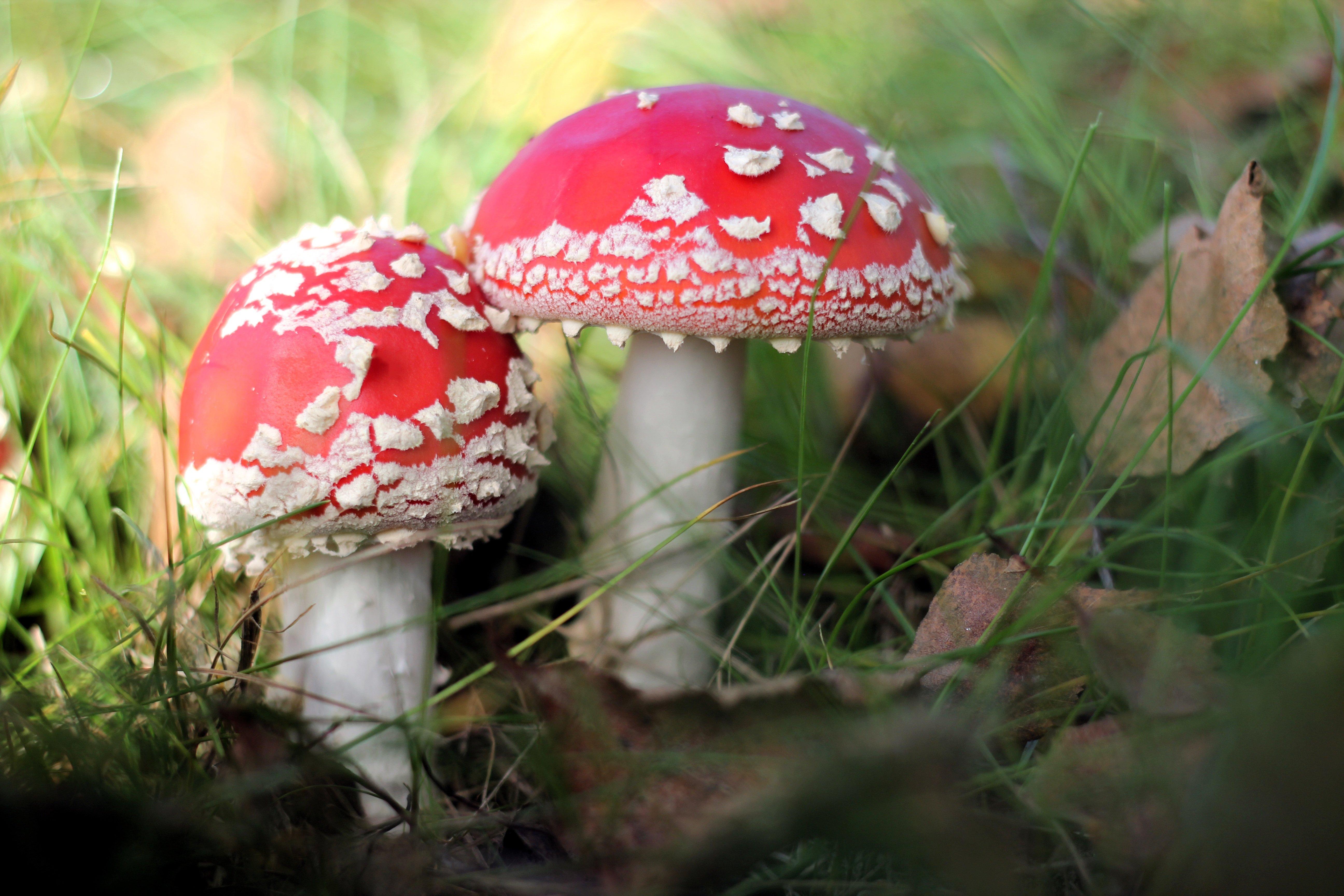 Het wemelt van de paddenstoelen in de Donkere Duinen. (Foto: Pixabay)
