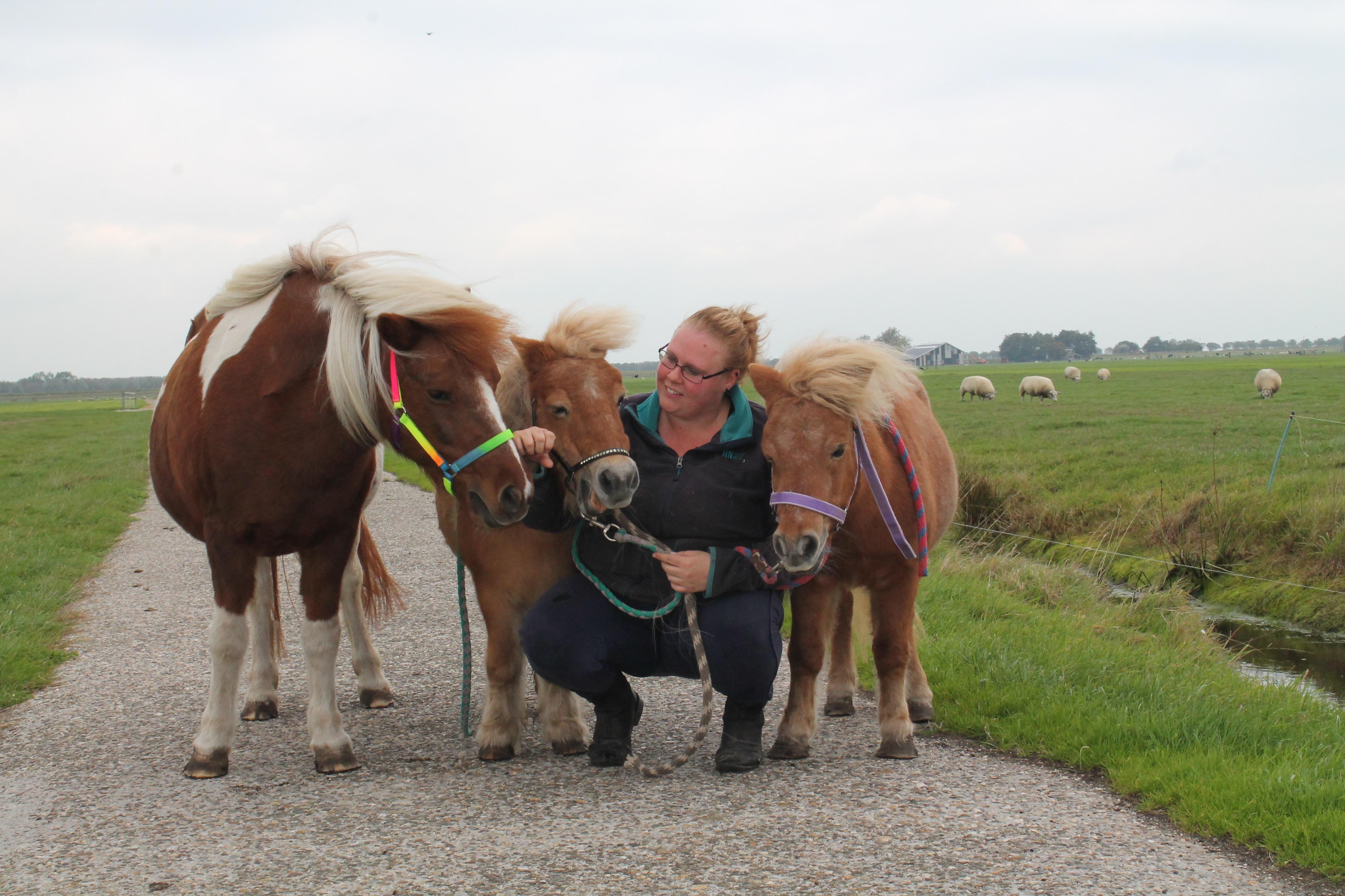 Desirée met haar verzorgpaarden Daisy,Mistral en Linda. (Foto: Shelley Zuizewind/RM)