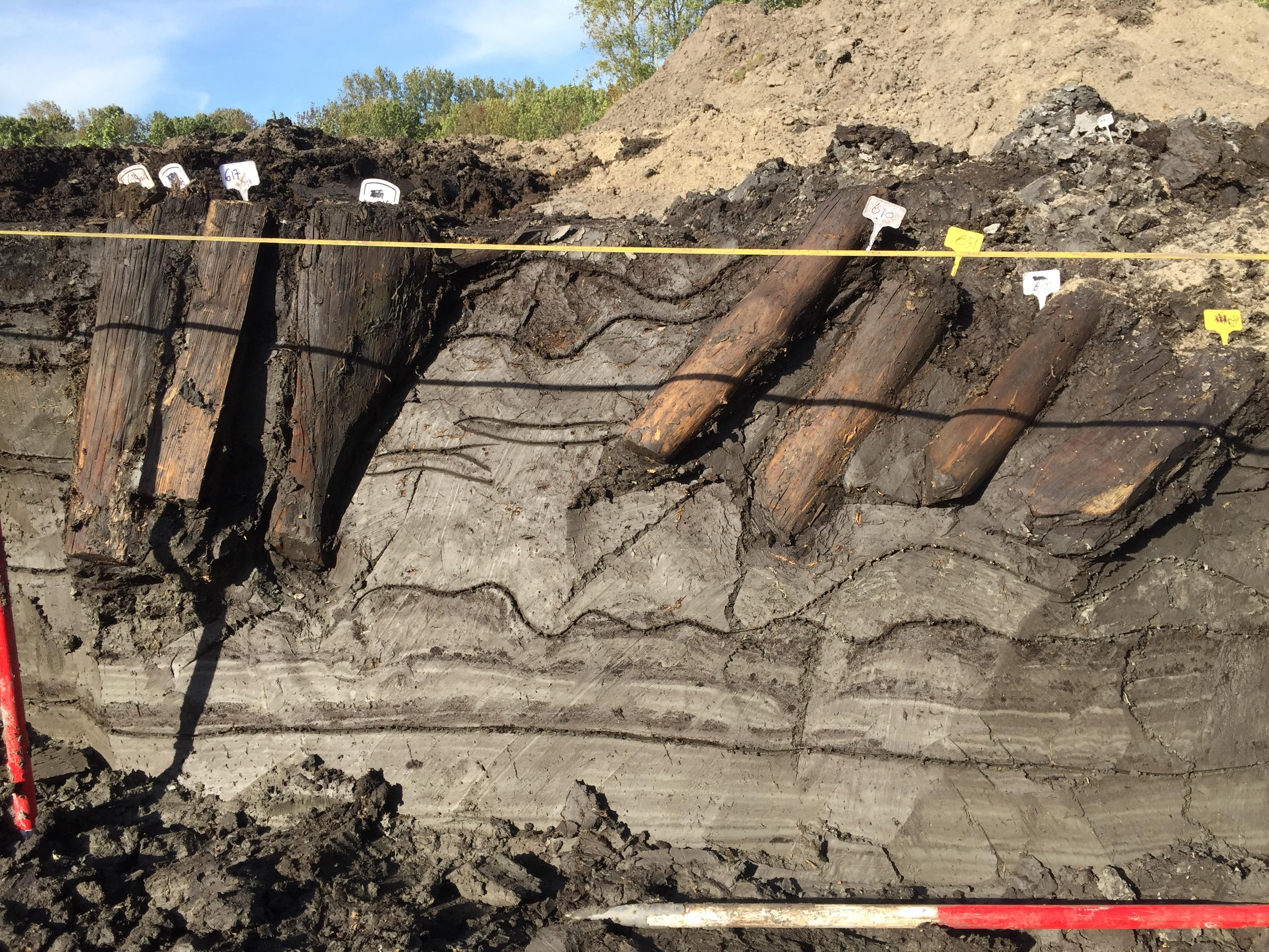 Archeologen leggen de noordhoek van de palissade bloot. Duidelijk zijn de in de grond bewaard gebleven onderkanten van de palen te zien. (Foto: gemeente Zaanstad) rodi.nl © rodi
