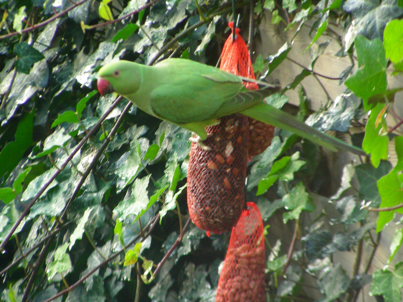 Vogelparadijs in Haarlem-Centrum