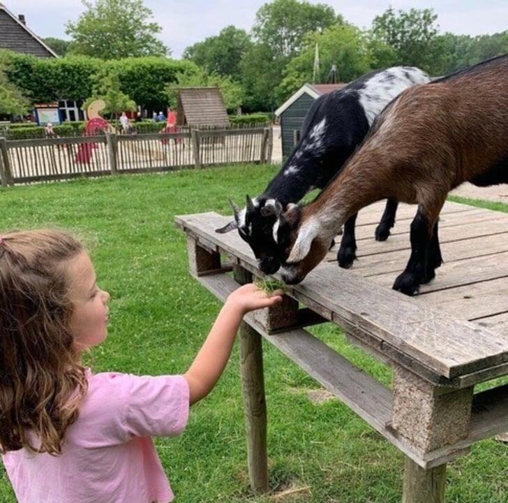 boerderij zorgvrij meivakantie kinderen haarlem