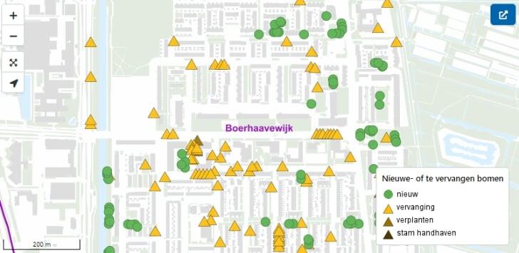 bomen haarlem schalkwijk