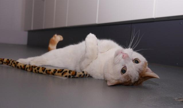Deze wat luie liefhebber van vloerverwarming zoekt een eigenaar waarbij hij lekker op schoot mag liggen